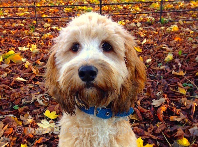Beautiful Dog Collars and Leads