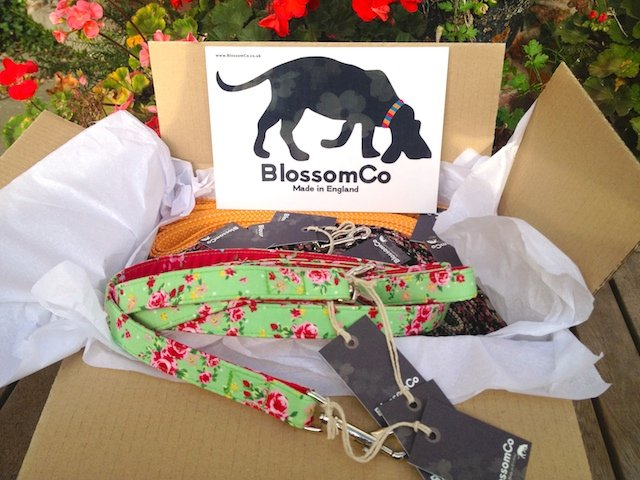 Starter Pack of handmade dog collars and leads by BlossomCo