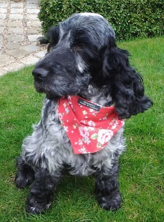 The Henley bandana for dogs by BlossomCo