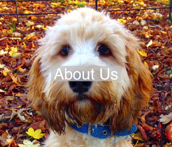 wholesale dog collars and leads uk supplier